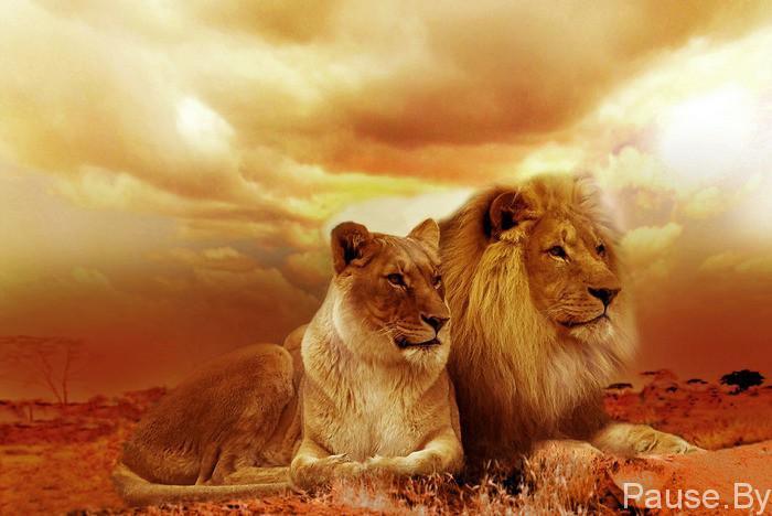 lion-577104_1280-700x468