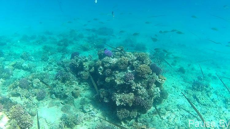 подводный мир Красного моря.jpg