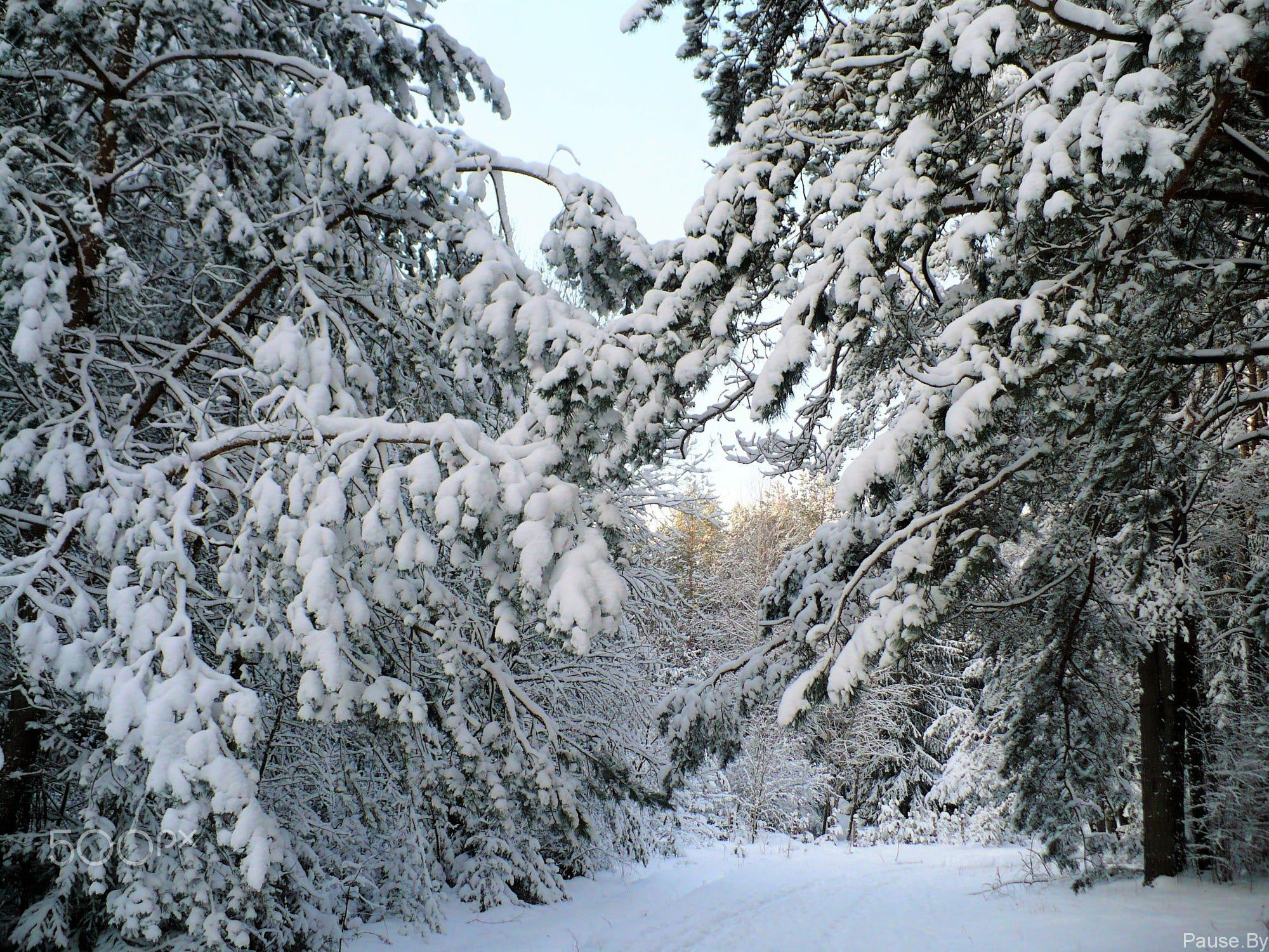winter_forest_minsk_2