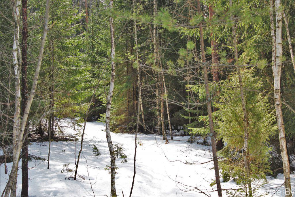tropa v lesu.jpg