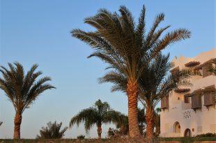 Пальмы возле дома.jpg