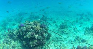 Подводный мир Красного моря(фото).jpg