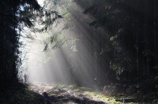 Puteshestviye na velosipede po temnomu lesu.jpg