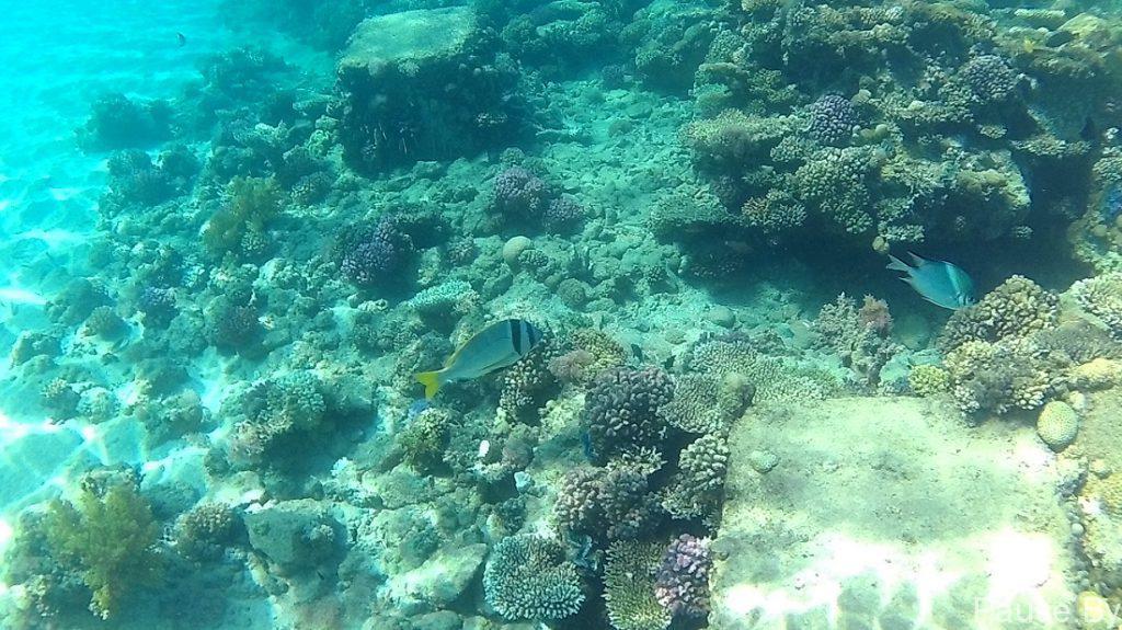 Подводный мир Красного моря 1.jpg
