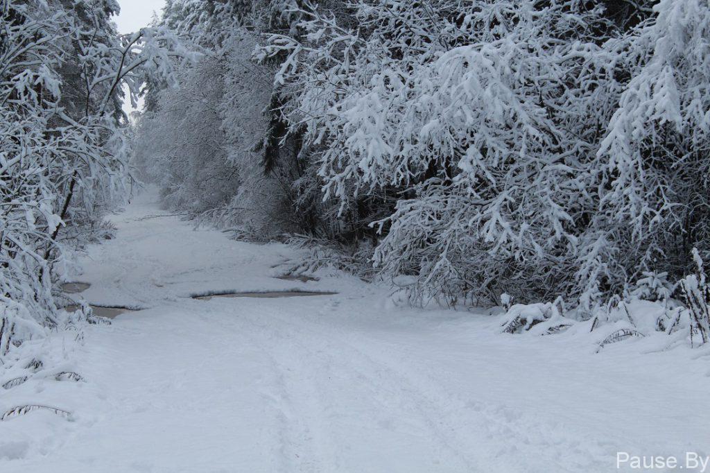 Зимняя дорога в заснеженном лесу.jpg
