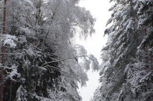 зимний лес фото.jpg
