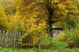 Осень на пасеке.jpg