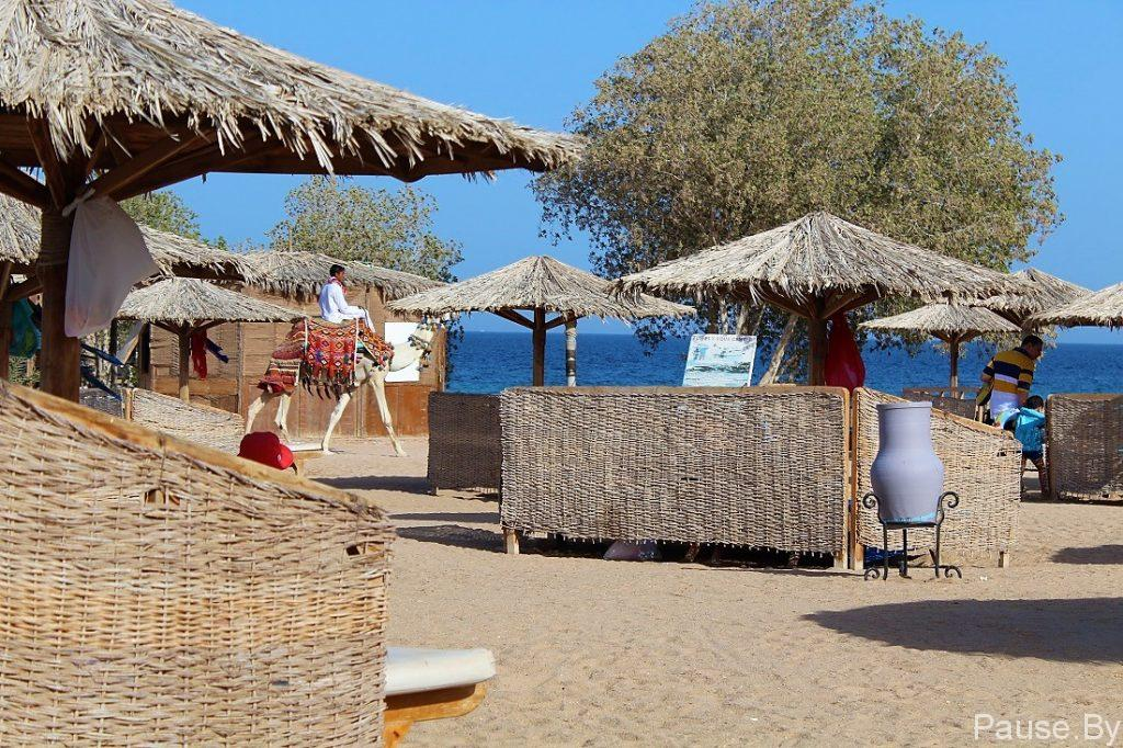 Фотосессия на пляже с верблюдом, в Египте.jpg