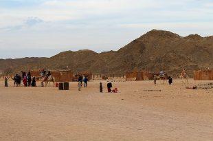 Деревня бедуинов в Египте, катание на верблюдах.jpg