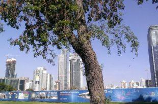 Поездки по Тель-Авиву на автобусе.jpg